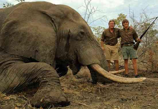 Jared-Rann-Elephant